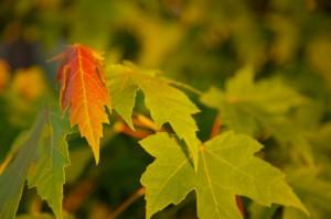 Lexington, VA Fall Colors