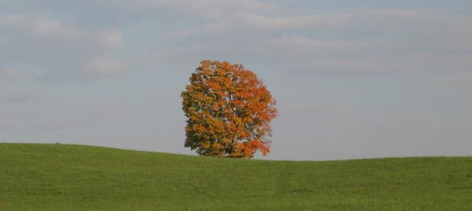 Wednesday's Weekend Outlook for the Lexington/Buena Vista/Rockbridge area of Virginia.